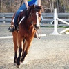 Up to 61% Off Horseback Riding in Powhatan