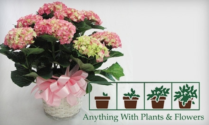 Anything With Plants & Flowers - Lakewood: $25 for a Blooming Mother's Day Plant from Anything With Plants & Flowers ($50 Value)