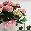 Half Off Mother's Day Bouquet