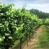 Up to 57% Off Fall Wine Tour in Hendersonville