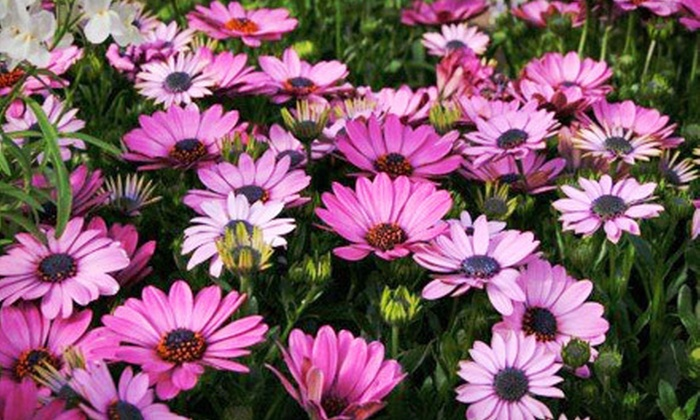 Gardner's Landscape Nursery - Uwchlan: $20 for $40 Worth of Plants, Flowers, and Decor at Gardner's Landscape Nursery