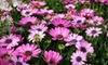 Gardners Landscape Nursery - Uwchlan: $20 for $40 Worth of Plants, Flowers, and Decor at Gardner's Landscape Nursery