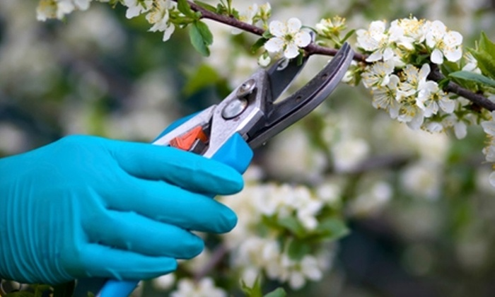 Timberline Gardens - Allendale Area: $20 for $40 Worth of Plants and Gardening Supplies at Timberline Gardens in Arvada