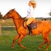 Up to 53% Off Horseback Riding in Myakka City