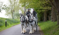 Carriage Ride for Two or Four or Fairy Tale Carriage Ride for Two at White Horse Farm Carriages (Up to 63% Off)