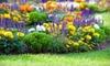 Green Meadow Nursery & Hardware - Camarillo: $15 for $30 Worth of Plants at Green Meadow Nursery and Hardware
