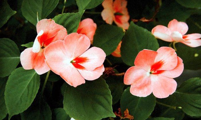 English Gardens - Multiple Locations: $10 for $20 Worth of Plants and Gardening Supplies at English Gardens