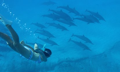 image for Dolphin Swim Tour for Adults or Children from Dolphins and You (Up to 27% Off). Four Options Available.