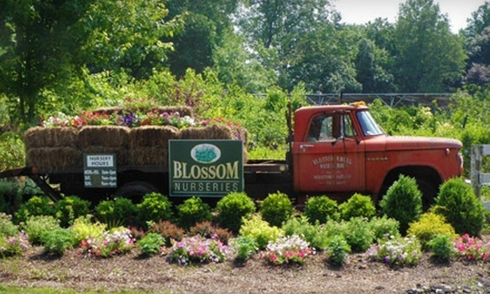Blossom Nurseries - Yorktown: $15 for $30 Worth of Perennials, Shrubs, and Trees at Blossom Nurseries in Yorktown Heights