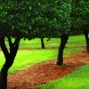 Half Off from Dave's Green Thumb Lawn Care