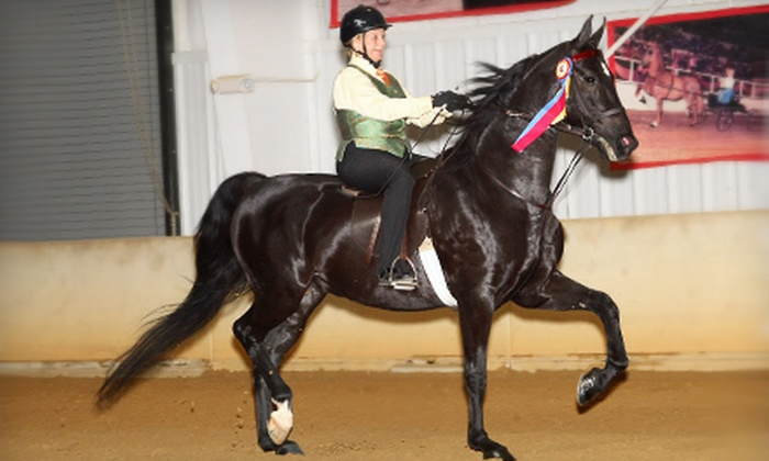 Minnesota Saddlebred Horse Association - Multiple Locations: $50 for Two 30-Minute Private Horseback-Riding Lessons for One from Minnesota Saddlebred Horse Association ($100 Value)