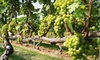 Lenz Winery - Southold: $12 for Premium Six-Wine Tasting Flight for Two at Lenz Winery in Peconic