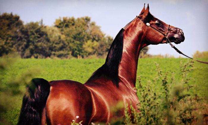 Legend Hall Arabians - Silverlake Estates: $55 for Three Private Horseback-Riding Lessons at Legend Hall Arabians ($120 Value)