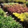 $10 for Plants, Flowers, and Trees in Eagan