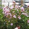 Half Off Gardening Products at Stadler Nurseries