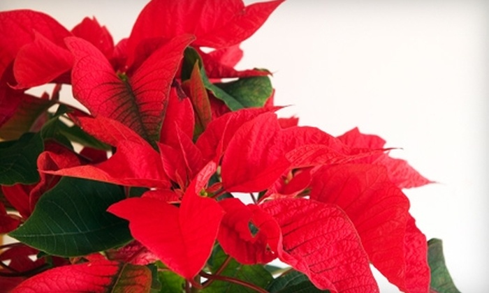 English Gardens - Multiple Locations: $10 for $20 Worth of Holiday Decorations and Gardening Supplies at English Gardens