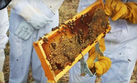 Three-Hour Introductory Beekeeping Class for One (a $125 value) - Round Rock Honey in Copper Canyon