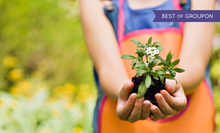 $20 for $40 Worth of Plants and Trees at Designs By Lee