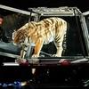 Dirk Arthur Wild Magic – Up to 35% Off Animal Magic Show