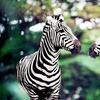 Up to Half Off Safari Tour for Two in Varysburg