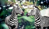Hidden Valley Animal Adventure - Depew: $16 for a 60-Minute Safari Trolley Tour for Two from Hidden Valley Animal Adventure in Varysburg (Up to $32 Value)