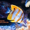 $7 for Tickets to Ocean Explorium in New Bedford