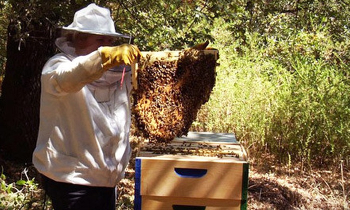 Thank Nature - Cotati: Beekeeping Class for One or Two at Thank Nature in Cotati (Up to 59% Off)