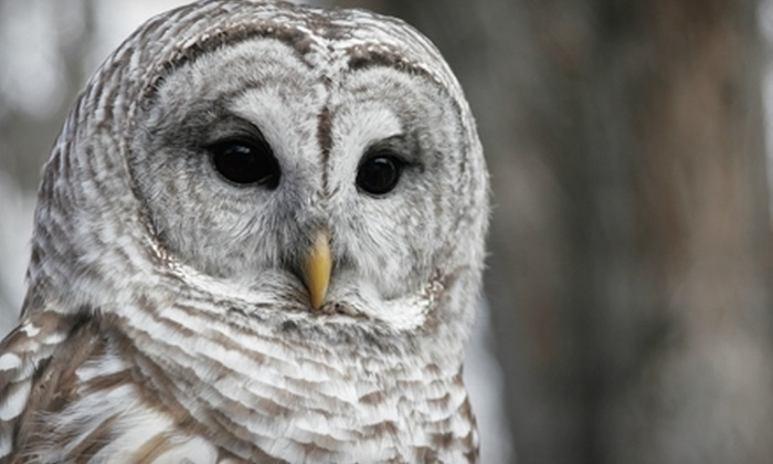 Tracy Aviary - Salt Lake City: $10 for a Family Four-Pack Admission to Tracy Aviary Plus 50% Off at the Gift Shop ($20 Value)