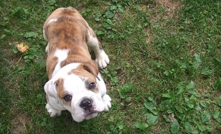 Sloppy Dog Wash: $10 Groupon for Pet Supplies - Sloppy Dog Wash in Tulsa