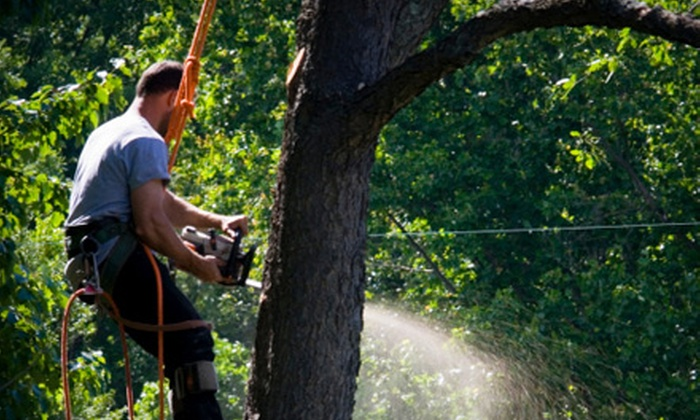 Robertson Tree Service - Plano: $99 for $300 Worth of Tree-Removal Services from Robertson Tree Service