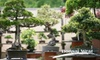 Bonsai West - Littleton: $32 for an Introductory Bonsai Class at Bonsai West in Littleton ($65 Value)