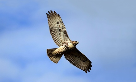 Active Participatory Falconry Experience at The Falcon Lady (62% Value). Two Options Available.