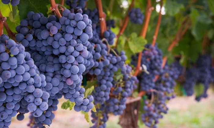 Auburn Road Vineyard & Winery - Pilesgrove: Vineyard Tour Package with Tastings and Glasses for Two or Four at Auburn Road Vineyard & Winery in Pilesgrove