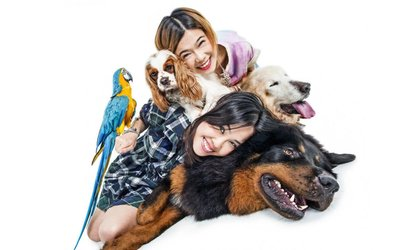 Pet or Family Photoshoot With Framed Print and Access to App from £12 at Venture Photography