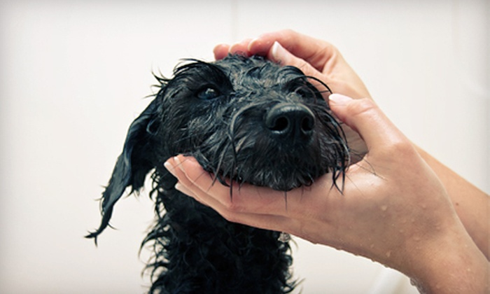 Lucca Bella Doggie Spa and Boutique - Oak Lawn: Dog Daycare or Bathing Package at Lucca Bella Doggie Spa and Boutique (Up to 76% Off). Four Options Available.