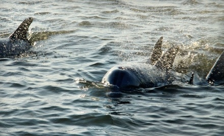 Barrier Island Eco Tours: Dolphin Discovery Sunset Tour - Barrier Island Eco Tours in Isle of Palms