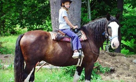 Carousel Horse Farm: 15-Minute Horse-Drawn Carriage Ride for 4 - Carousel Horse Farm in Casco