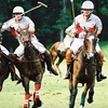 51% Off Ticket to Polo Championship