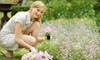 Flower Barn Nursery - Sterling Heights: $10 for $20 Worth of Plants, Flowers, and Garden Supplies at Flower Barn Nursery