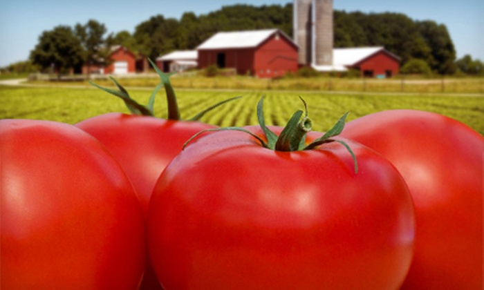 Paris Barns - Marshall: Visit for Two or Four at Organic-Tomato Fest with Organic-Farm Workshop at Paris Barns (Up to 60% Off)