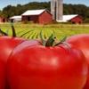 Up to 60% Off Organic-Tomato Fest Visit in Paris