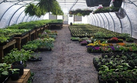 $20 Groupon to The Green Thumb - The Green Thumb in Aiken