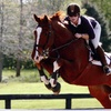 51% Off 45-Minute Private Riding Lesson