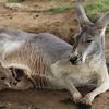 50% Off Visits to Sharkarosa Wildlife Ranch