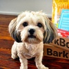 BarkBox – Up to 41% Off Monthly Delivery of Dog Goodies