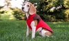 Eddie Bauer Micro-Quilted Hunting-Dog Vest for Small Breeds: Eddie Bauer Micro-Quilted Hunting-Dog Vest for Small Breeds