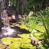 Randy's Perennials & Water Gardens - Lawrenceville: $25 Worth of Plants and Garden Accessories