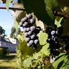 Half Off Tour and Tasting at Zorvino Vineyards