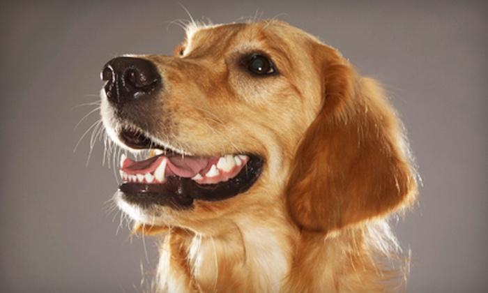 Kennel Creek Pet Resort - Leawood: $10 Toward Pet Boarding and Grooming