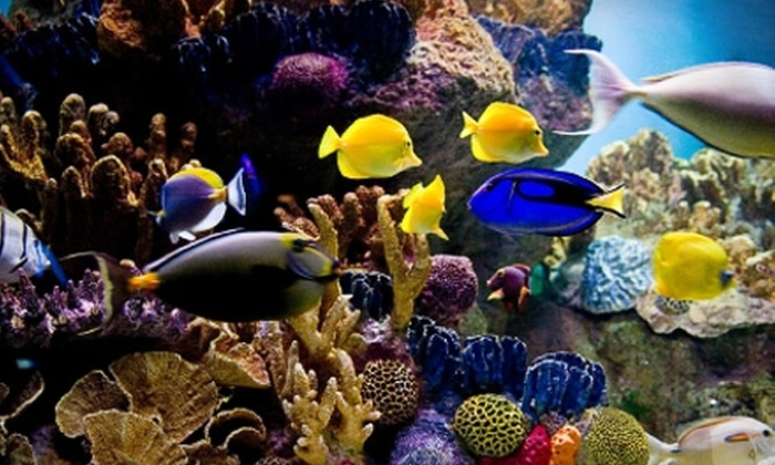 The Pier Aquarium - Tampa Bay Area: Two Admissions or a Family Membership to The Pier Aquarium in St. Petersburg